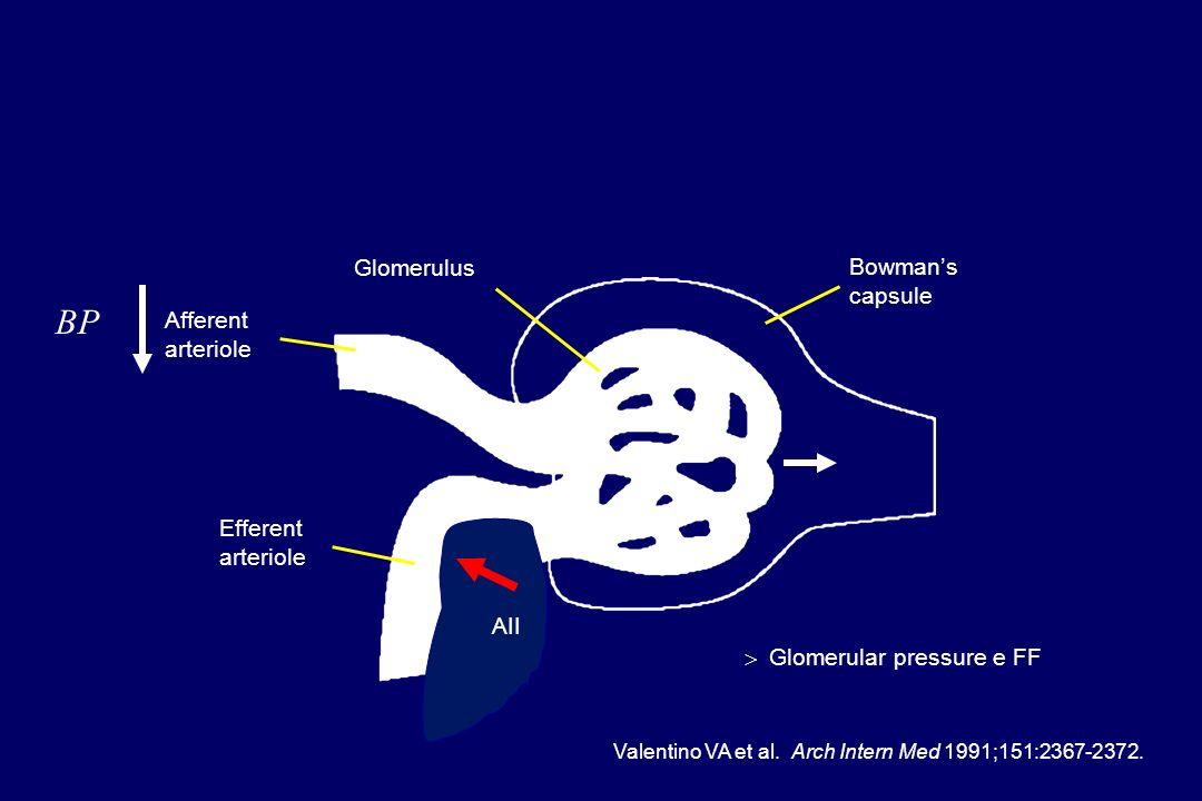 BP Glomerulus Bowman's capsule Afferent arteriole Efferent arteriole