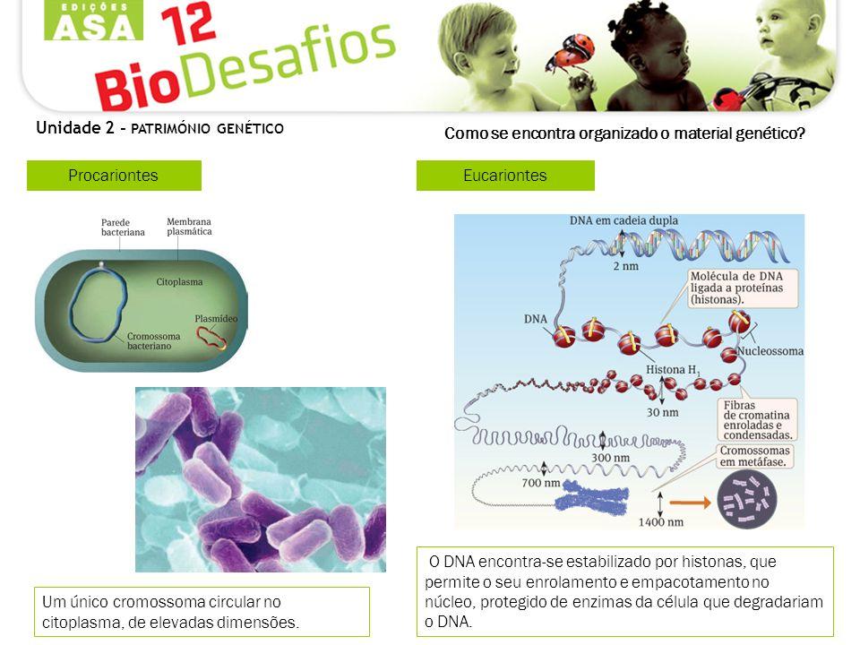Como se encontra organizado o material genético