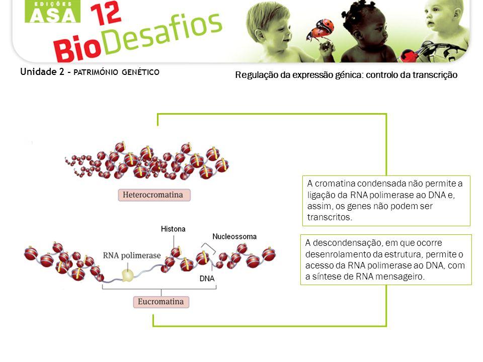 Regulação da expressão génica: controlo da transcrição