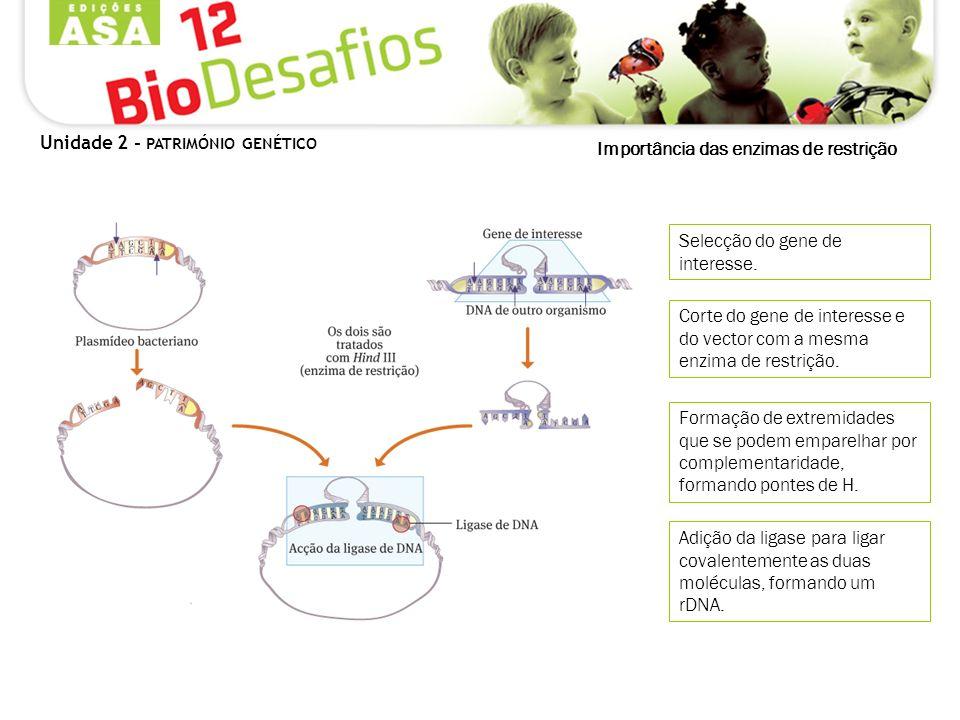Importância das enzimas de restrição