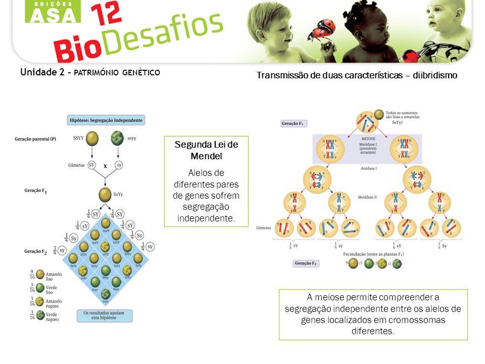 Transmissão de duas características – diibridismo