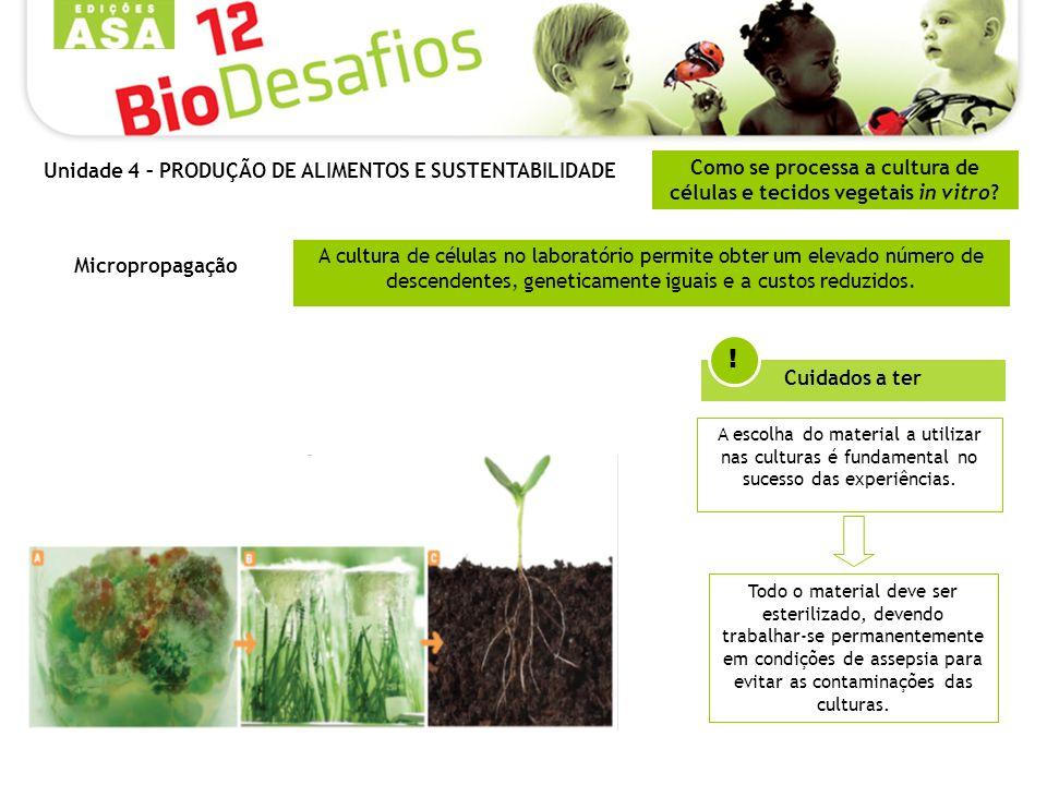 Como se processa a cultura de células e tecidos vegetais in vitro