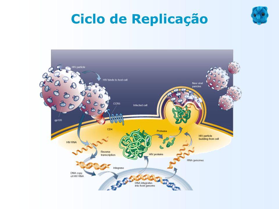 Ciclo de Replicação