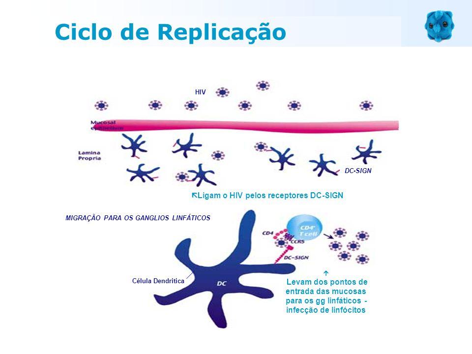 Ciclo de Replicação Ligam o HIV pelos receptores DC-SIGN HIV DC-SIGN