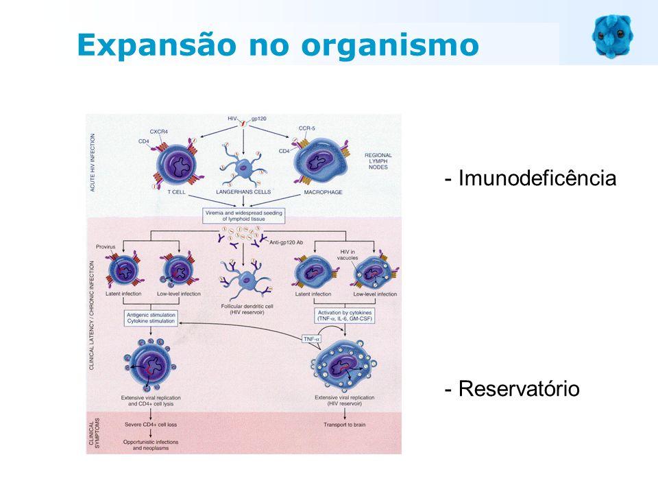 Expansão no organismo Imunodeficência Reservatório