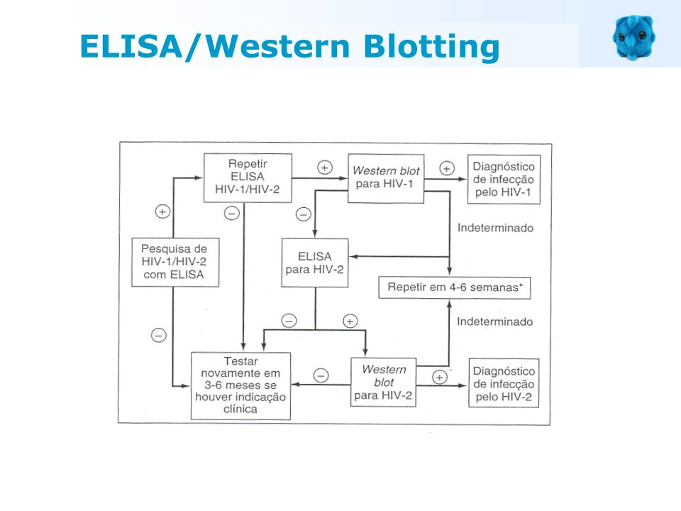 ELISA/Western Blotting