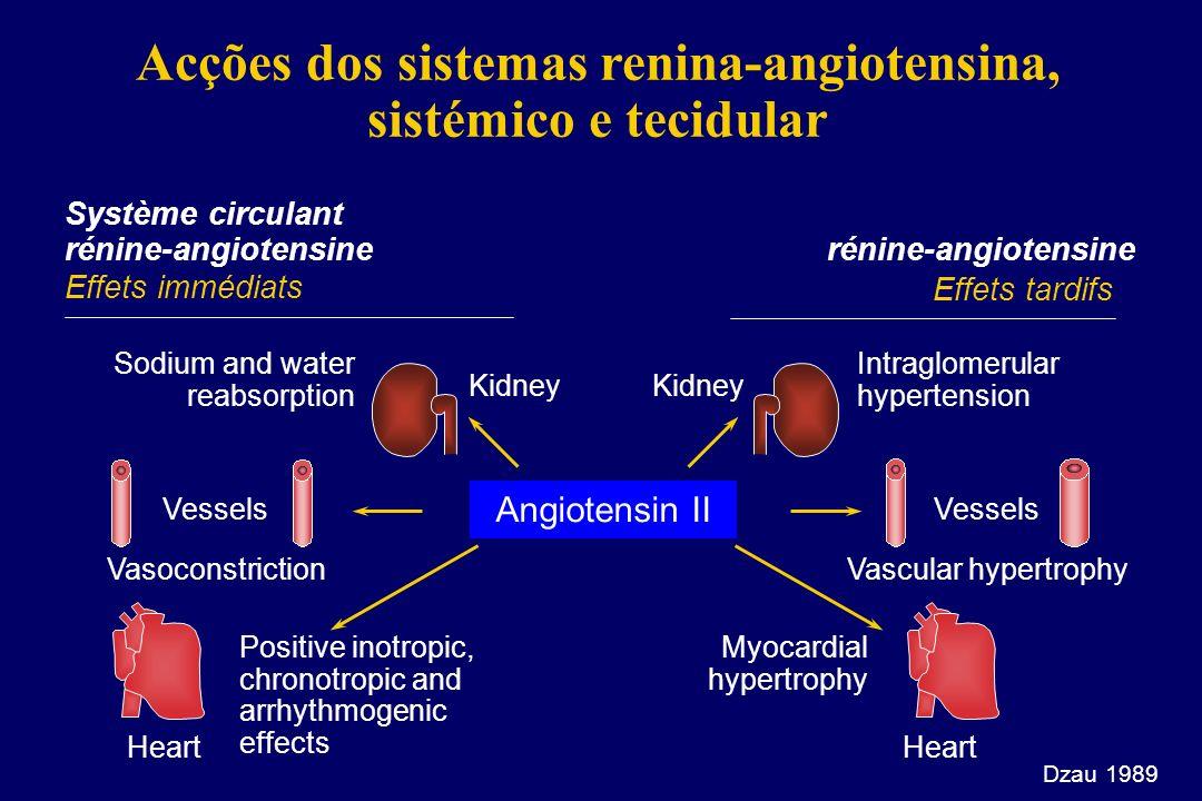 Acções dos sistemas renina-angiotensina, sistémico e tecidular