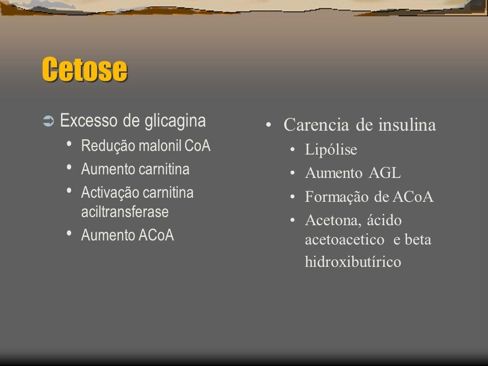 Cetose Excesso de glicagina Carencia de insulina Redução malonil CoA