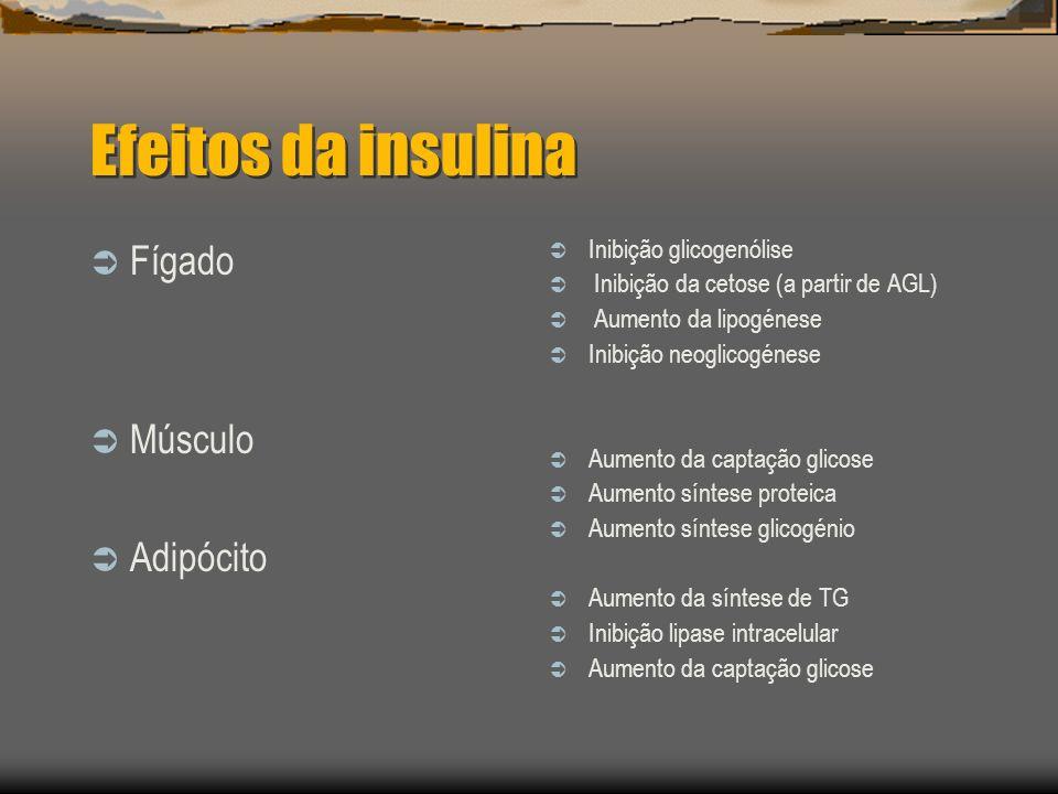 Efeitos da insulina Fígado Músculo Adipócito Inibição glicogenólise