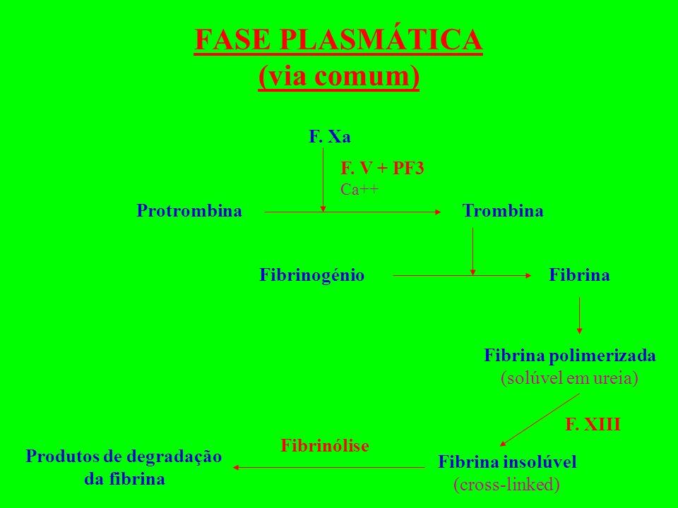 FASE PLASMÁTICA (via comum)