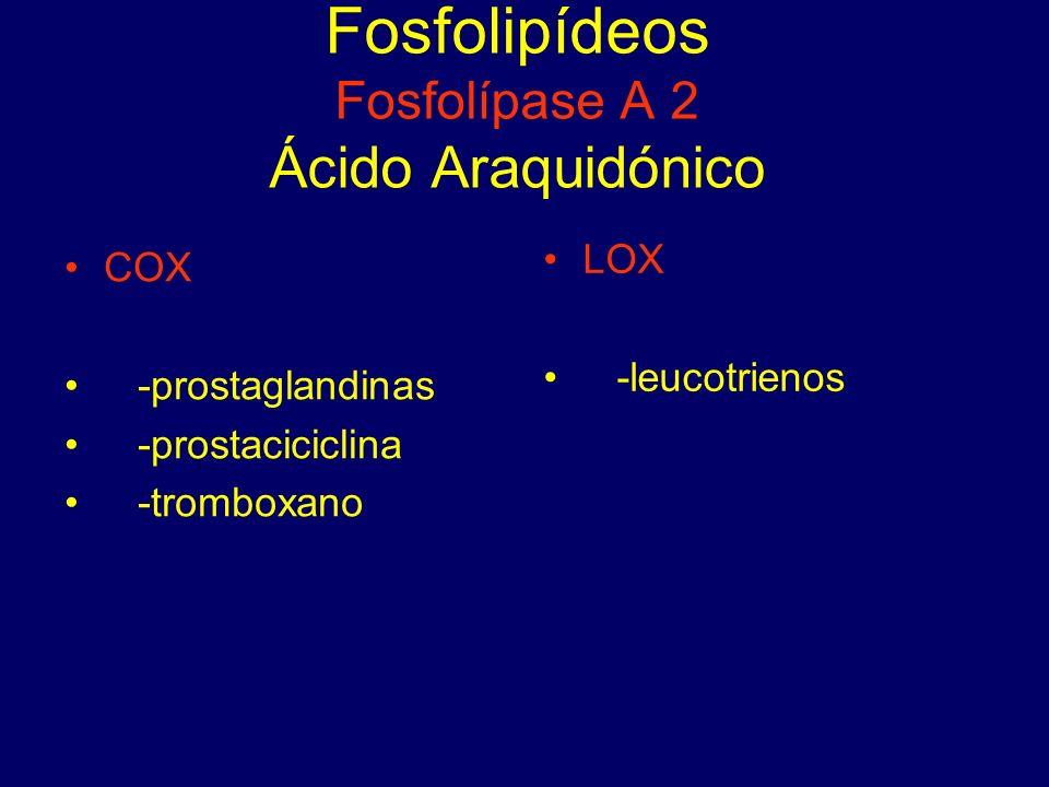 Fosfolipídeos Fosfolípase A 2 Ácido Araquidónico