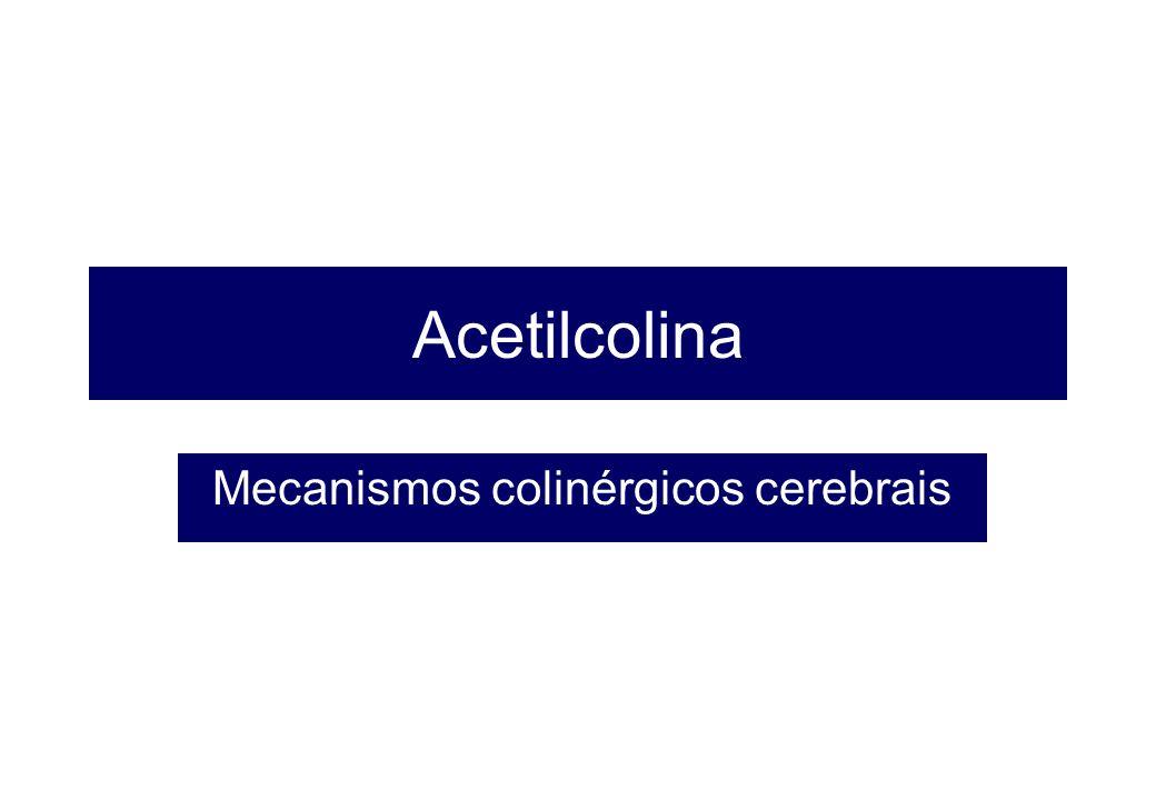 Mecanismos colinérgicos cerebrais