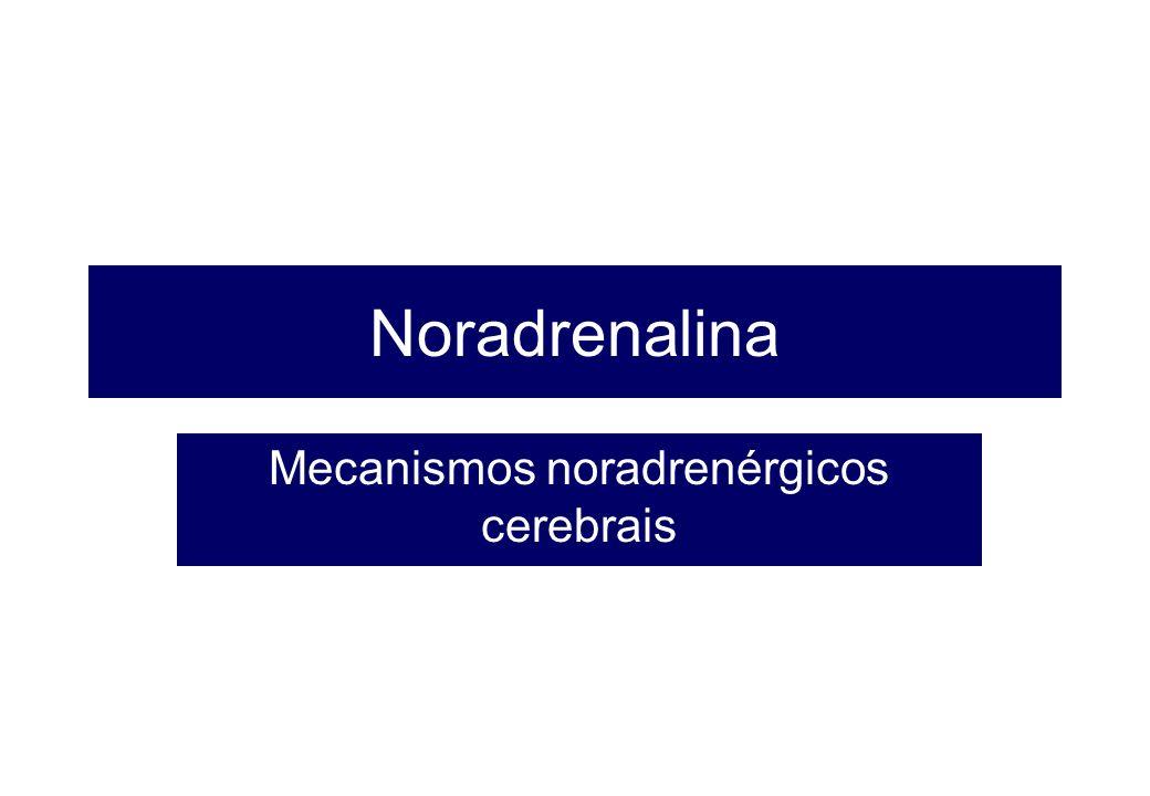 Mecanismos noradrenérgicos cerebrais