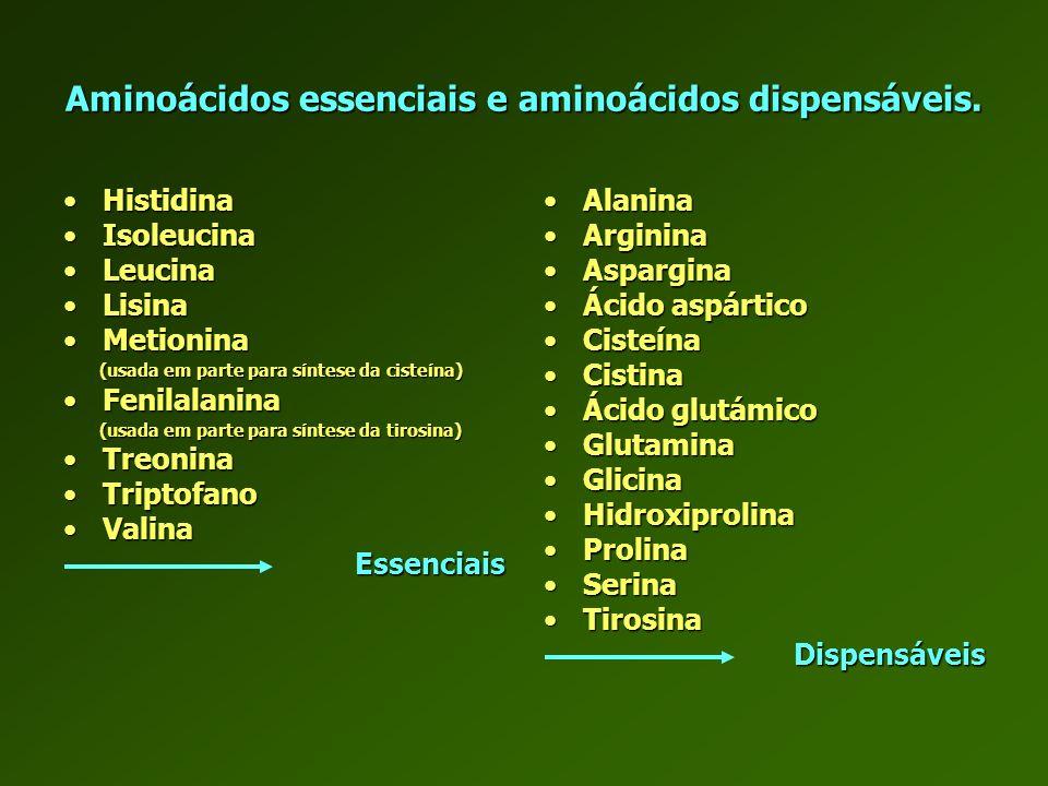 Aminoácidos essenciais e aminoácidos dispensáveis.