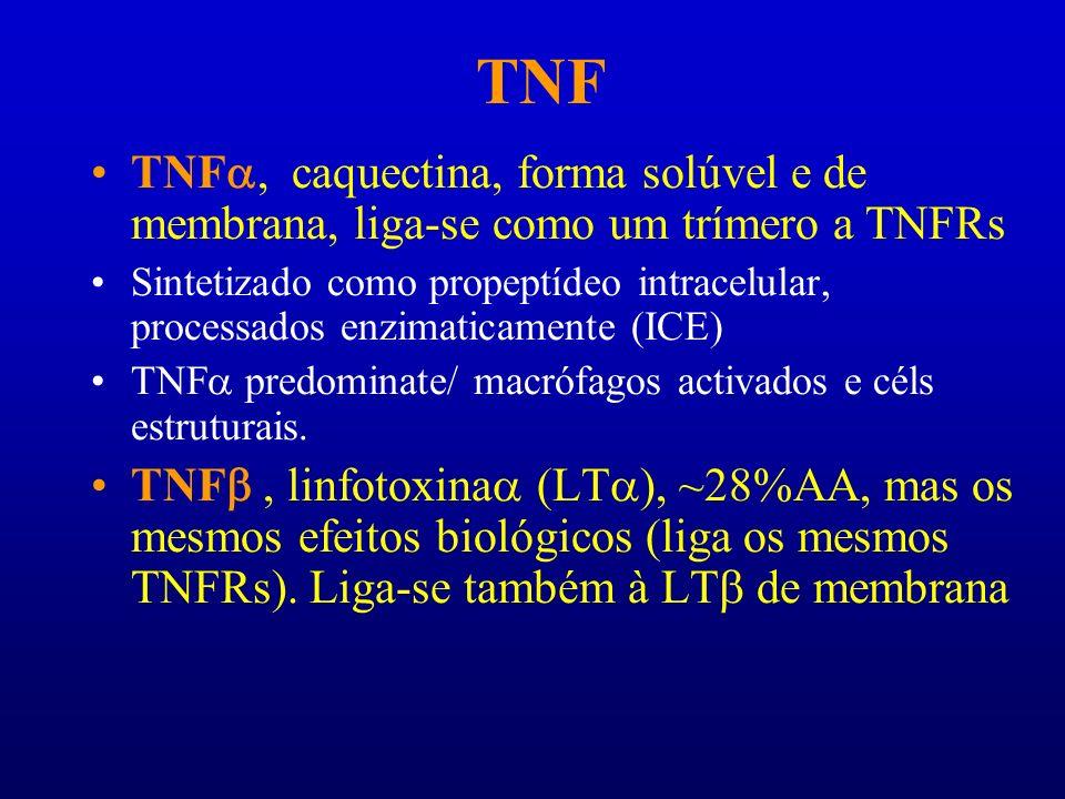 TNF TNFa, caquectina, forma solúvel e de membrana, liga-se como um trímero a TNFRs.