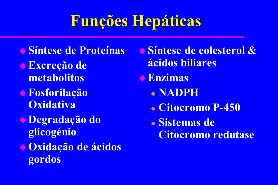 Funções Hepáticas Síntese de Proteínas Excreção de metabolitos