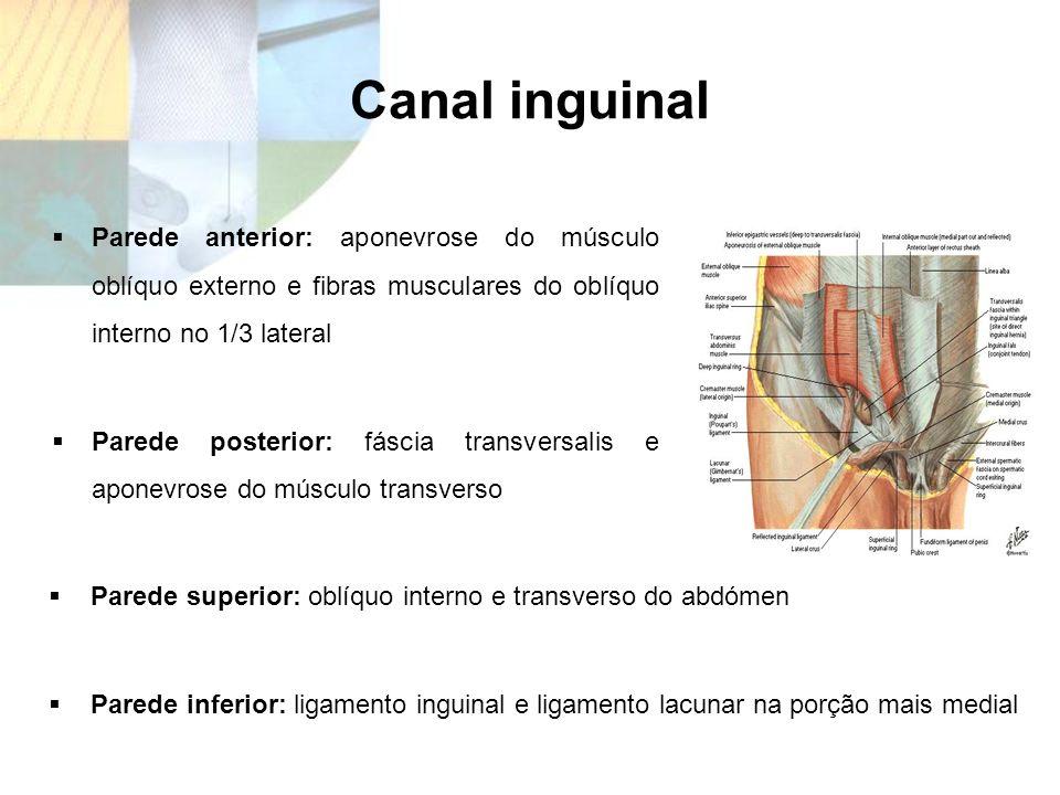 Canal inguinal Parede anterior: aponevrose do músculo oblíquo externo e fibras musculares do oblíquo interno no 1/3 lateral.
