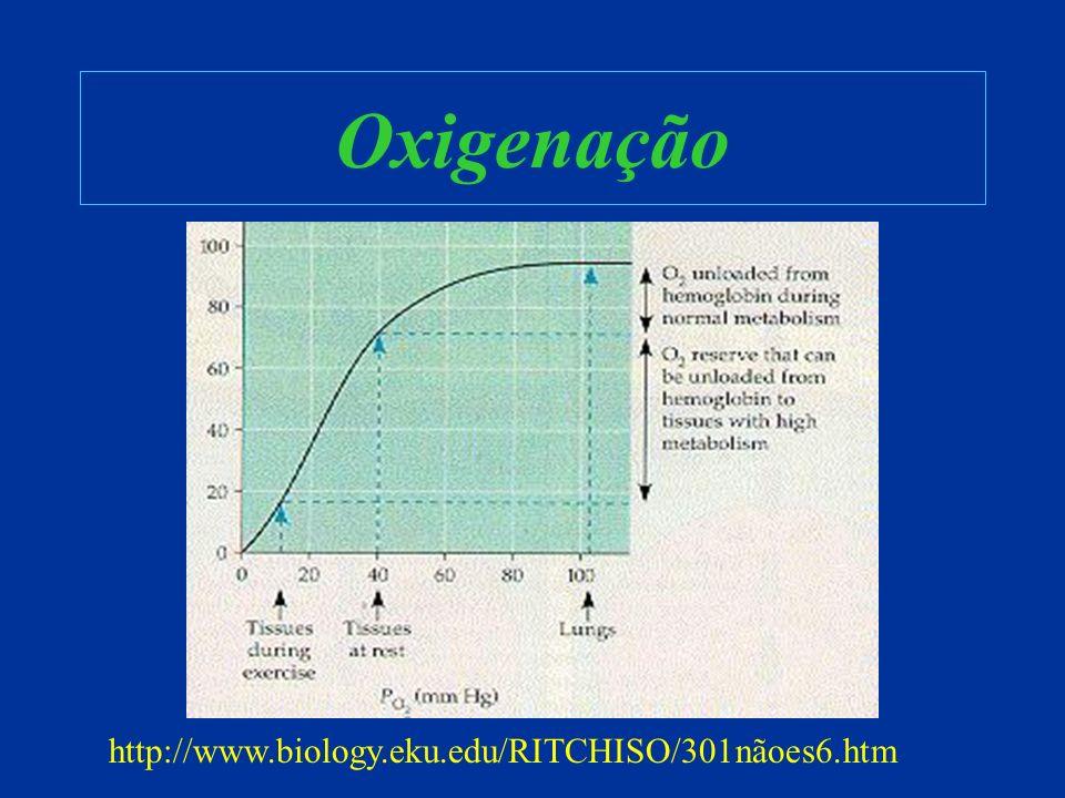 Oxigenação http://www.biology.eku.edu/RITCHISO/301nãoes6.htm
