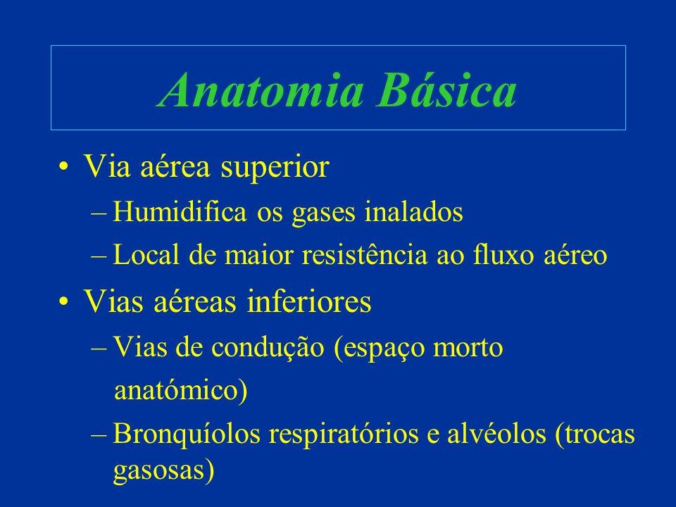 Anatomia Básica Via aérea superior Vias aéreas inferiores
