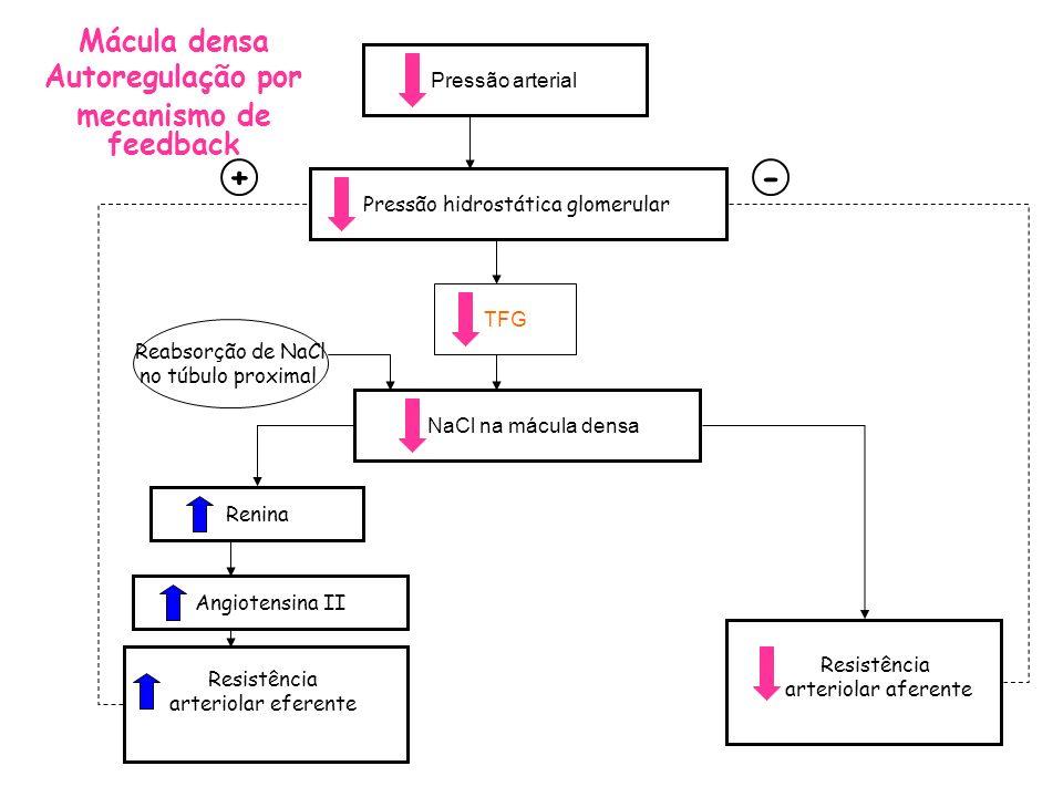 Pressão hidrostática glomerular