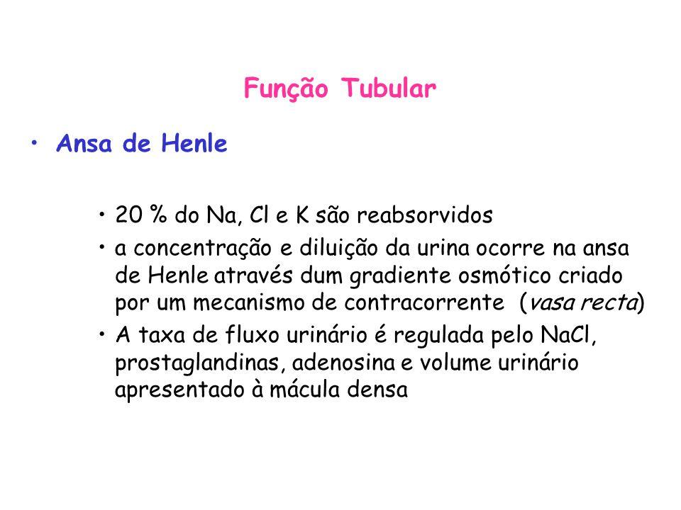 Função Tubular Ansa de Henle 20 % do Na, Cl e K são reabsorvidos
