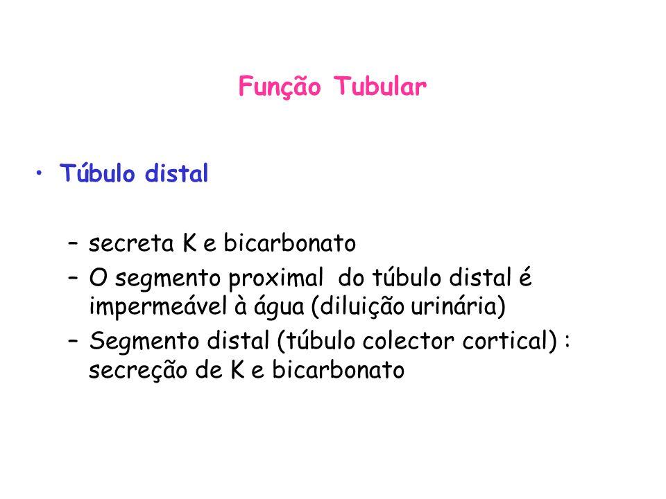 Função Tubular Túbulo distal secreta K e bicarbonato