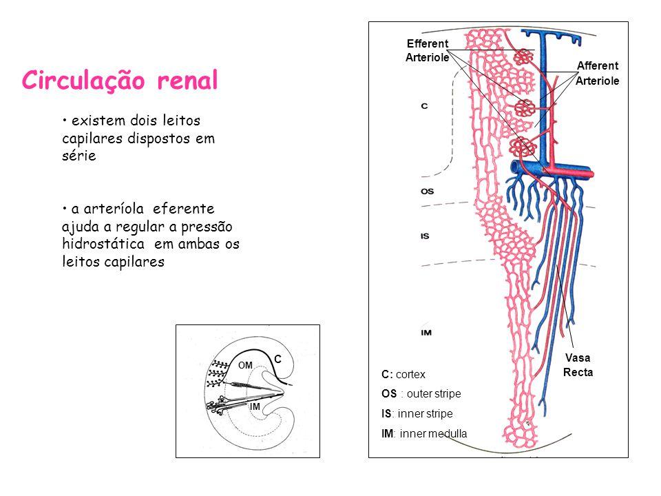 Circulação renal existem dois leitos capilares dispostos em série