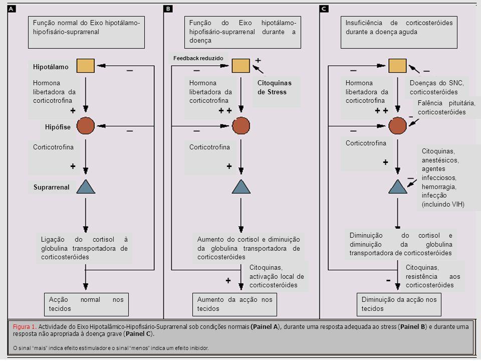 Função normal do Eixo hipotálamo-hipofisário-suprarrenal