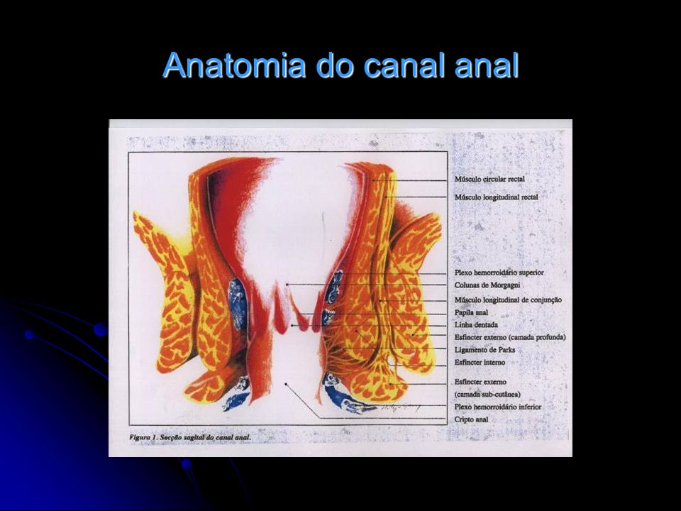 Anatomia do canal anal