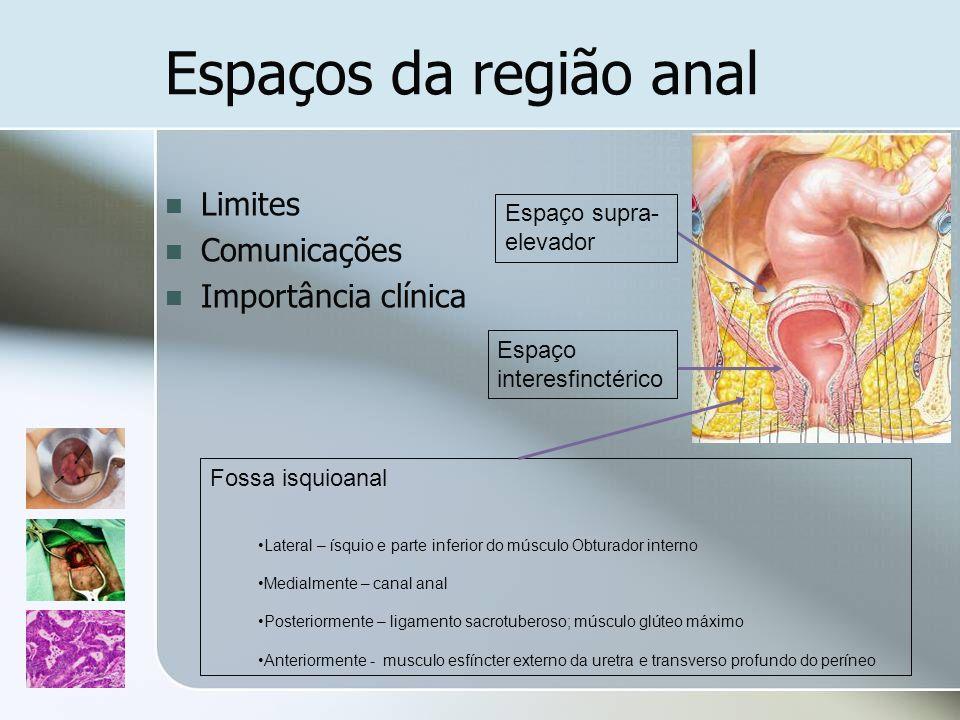 Espaços da região anal Limites Comunicações Importância clínica
