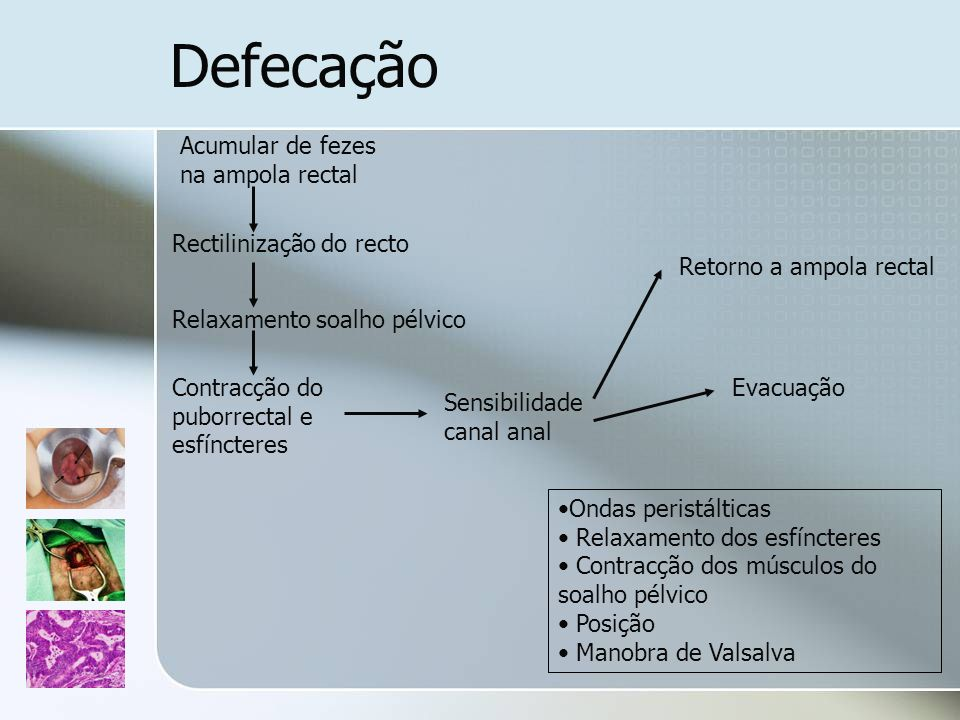 Defecação Acumular de fezes na ampola rectal Rectilinização do recto