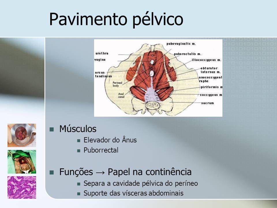 Pavimento pélvico Músculos Funções → Papel na continência