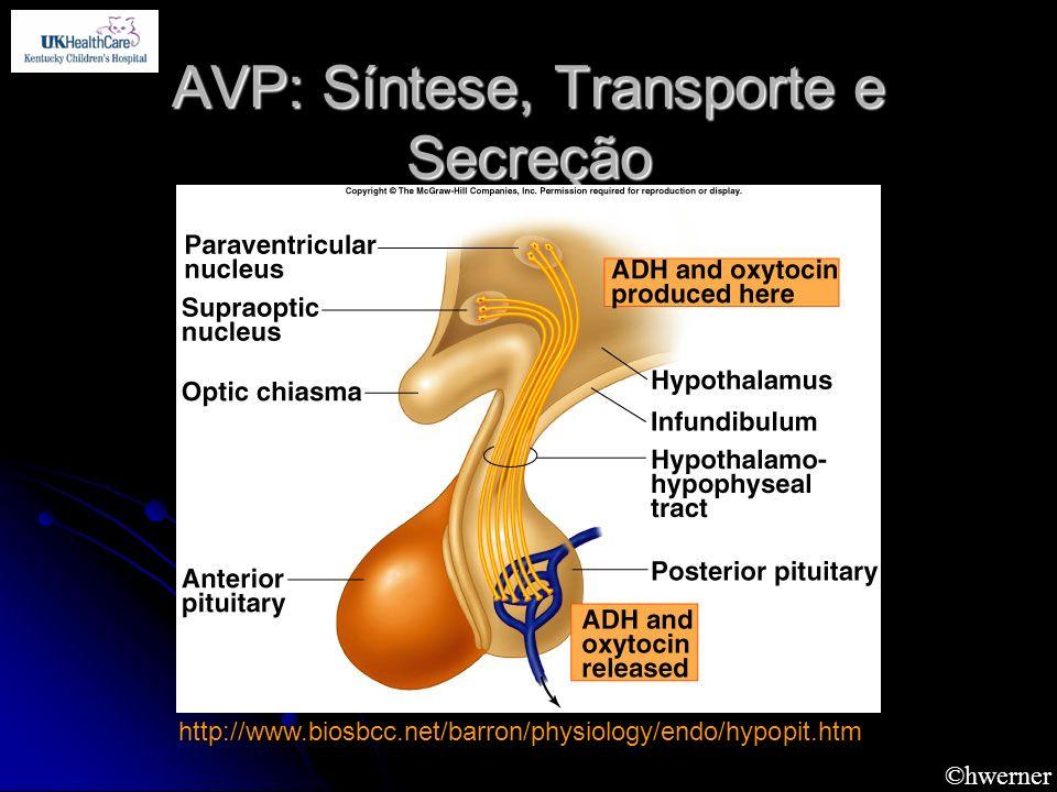 AVP: Síntese, Transporte e Secreção