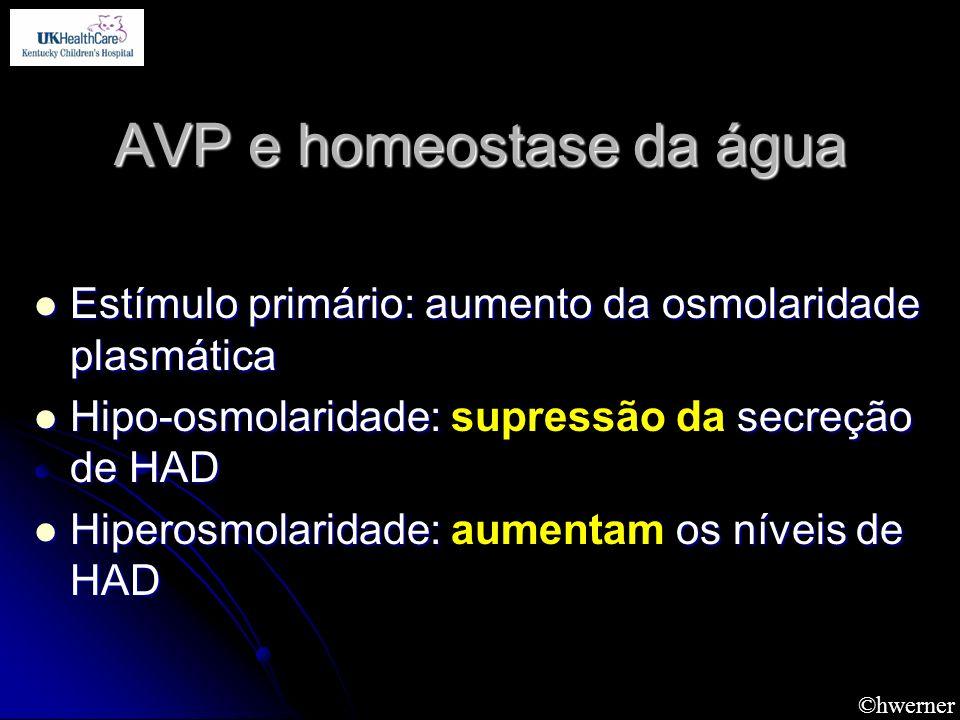 AVP e homeostase da água