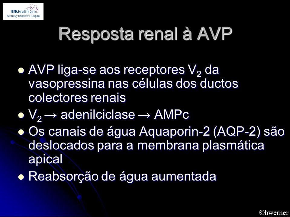 Resposta renal à AVPAVP liga-se aos receptores V2 da vasopressina nas células dos ductos colectores renais.