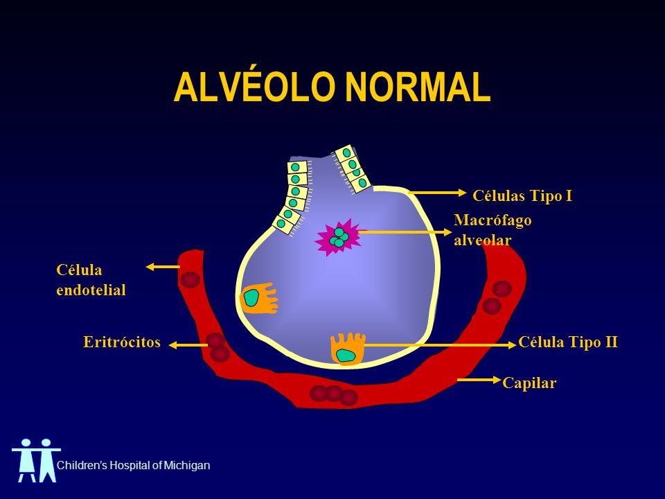 ALVÉOLO NORMAL Células Tipo I Macrófago alveolar Célula endotelial