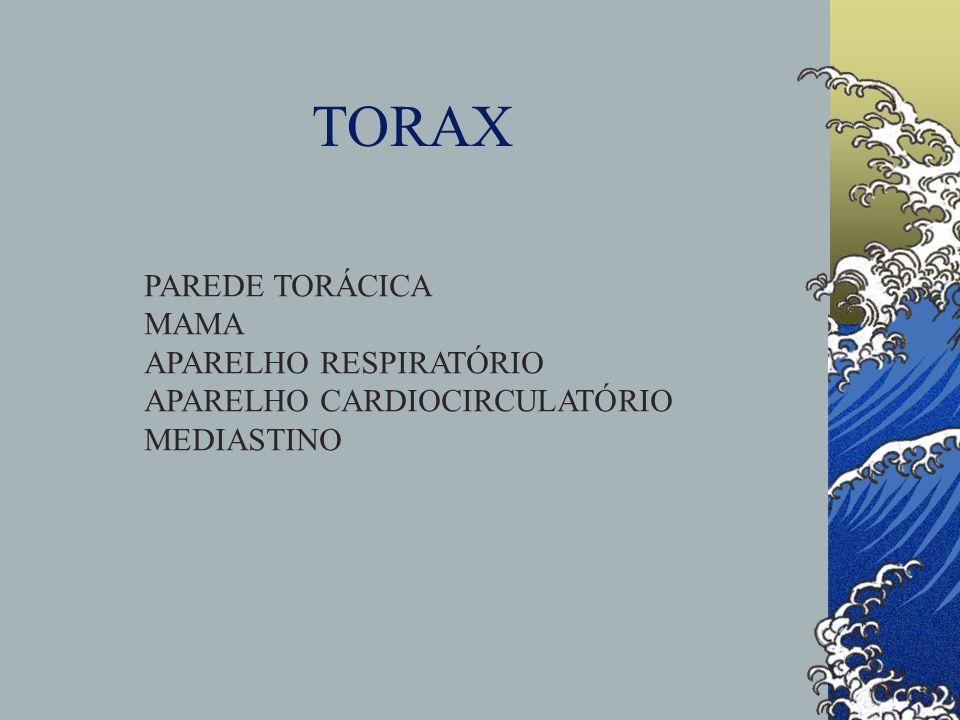 TORAX PAREDE TORÁCICA MAMA APARELHO RESPIRATÓRIO