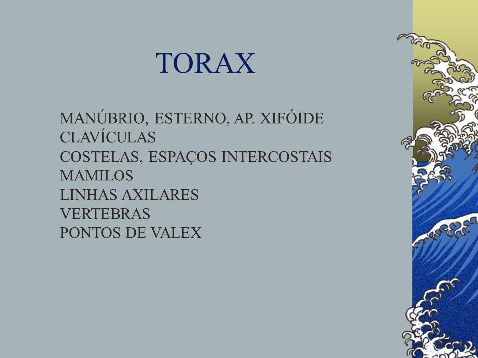 TORAX MANÚBRIO, ESTERNO, AP. XIFÓIDE CLAVÍCULAS
