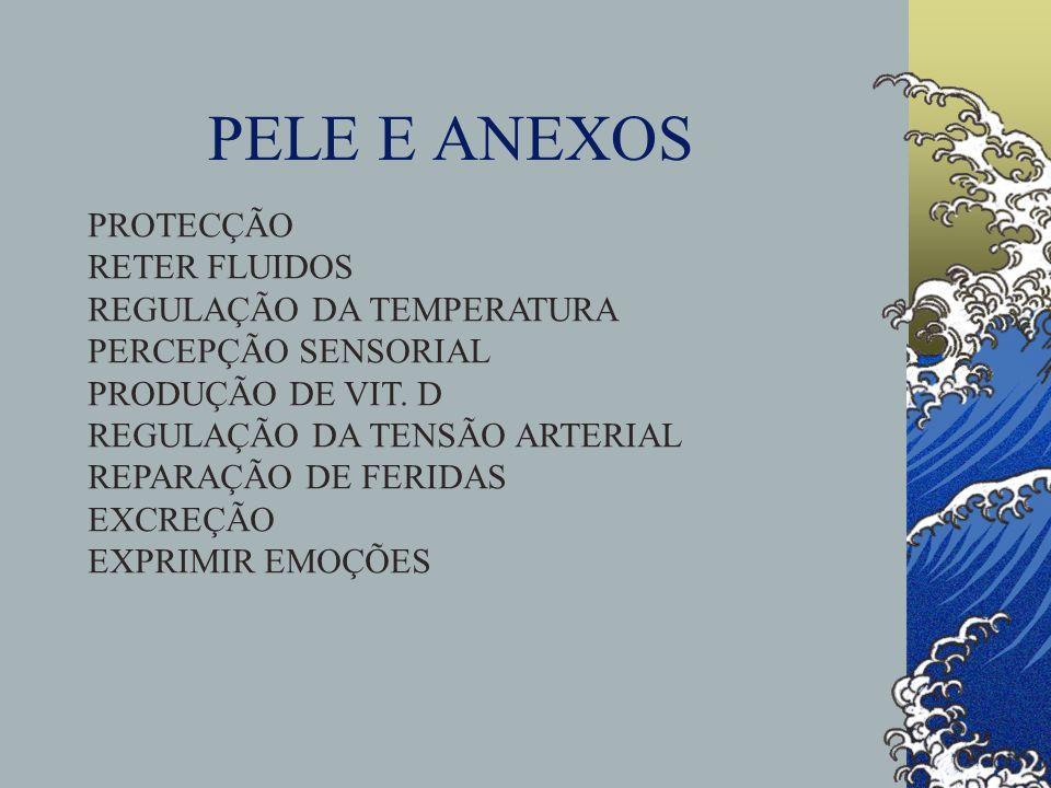 PELE E ANEXOS PROTECÇÃO RETER FLUIDOS REGULAÇÃO DA TEMPERATURA