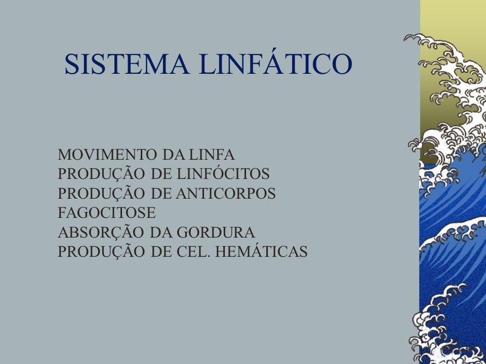 SISTEMA LINFÁTICO MOVIMENTO DA LINFA PRODUÇÃO DE LINFÓCITOS