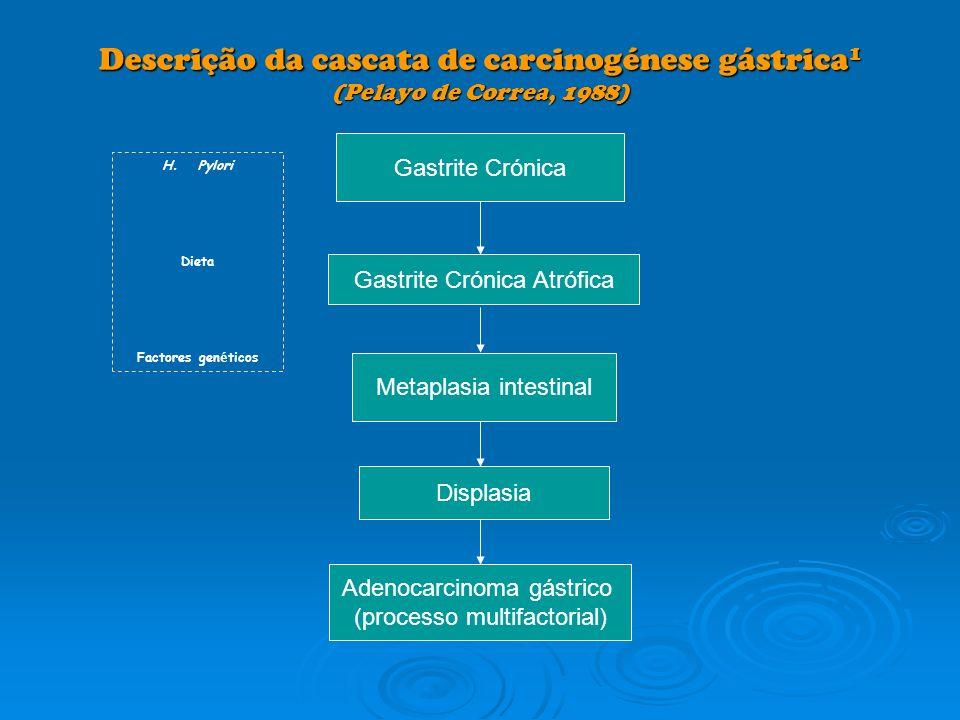 Descrição da cascata de carcinogénese gástrica1 (Pelayo de Correa, 1988)