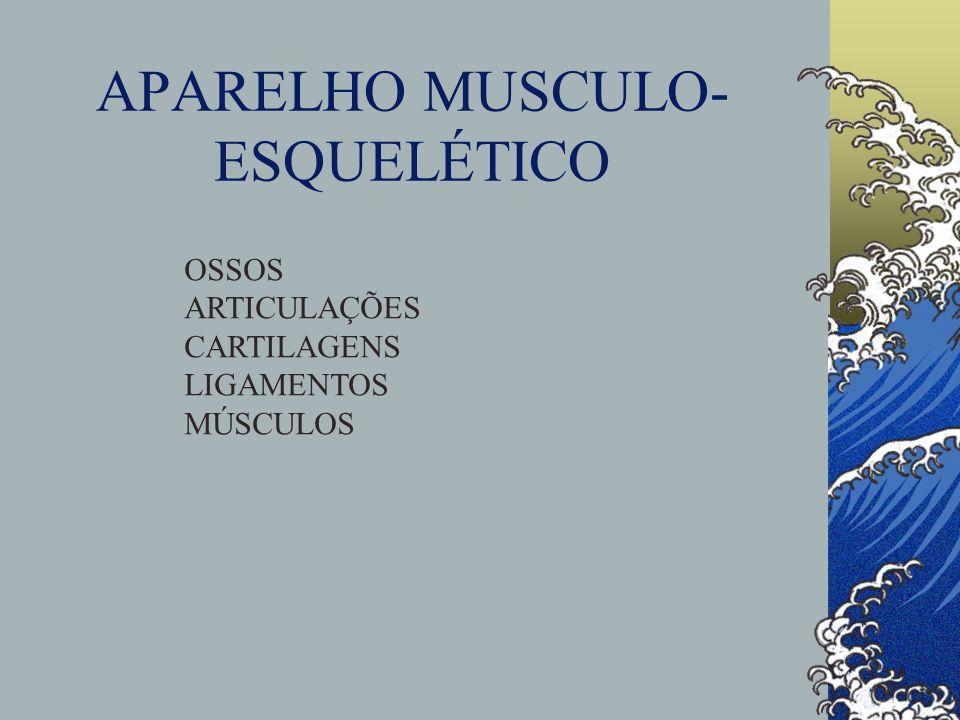 APARELHO MUSCULO-ESQUELÉTICO