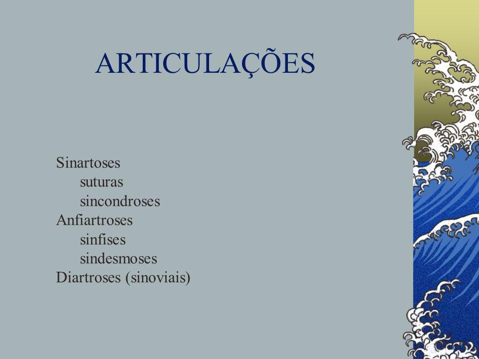 ARTICULAÇÕES Sinartoses suturas sincondroses Anfiartroses sinfises