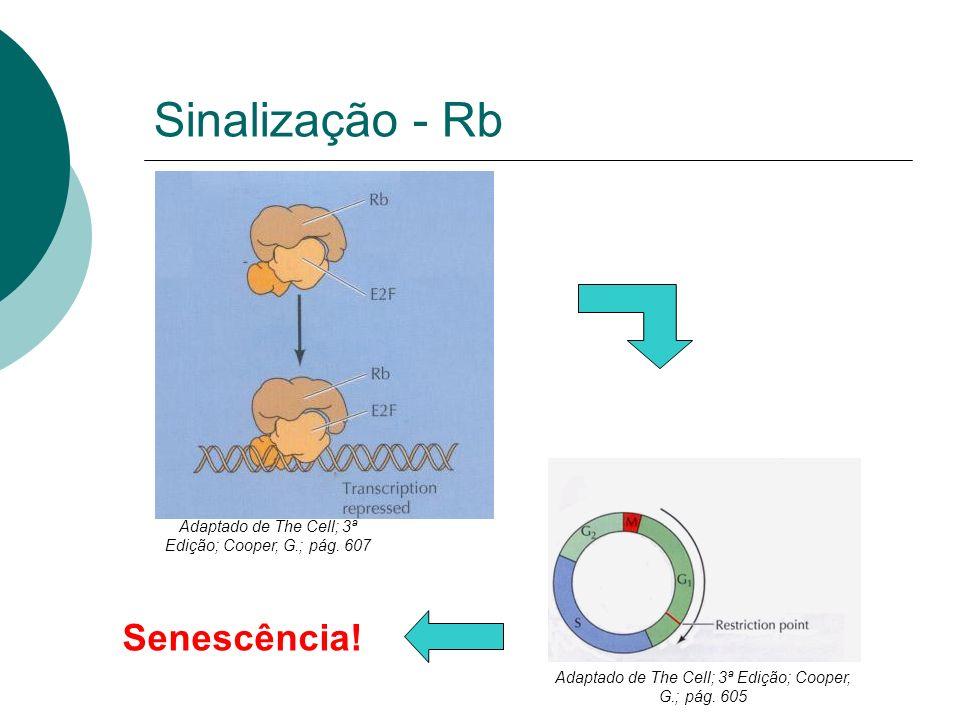 Sinalização - Rb Senescência!