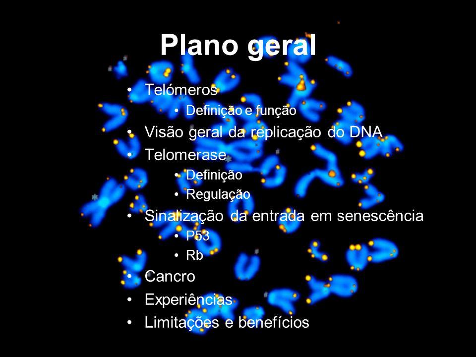 Plano geral Telómeros Visão geral da replicação do DNA Telomerase