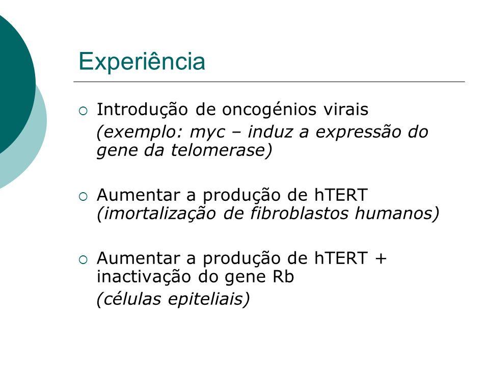 Experiência Introdução de oncogénios virais