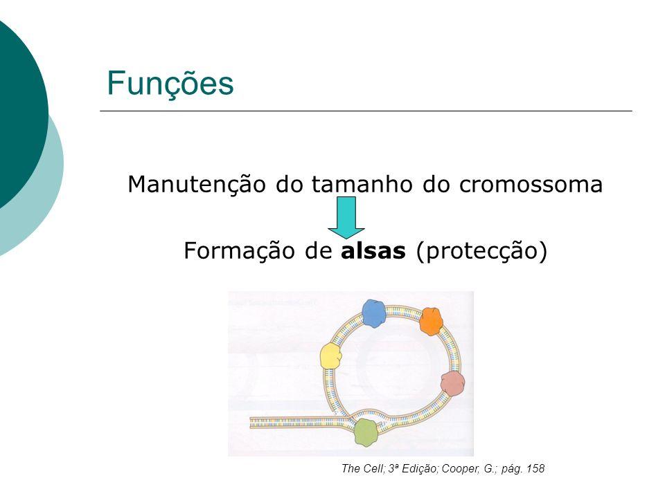 Funções Manutenção do tamanho do cromossoma