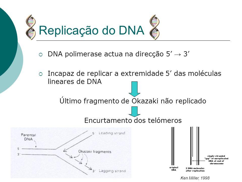 Replicação do DNA DNA polimerase actua na direcção 5' → 3'