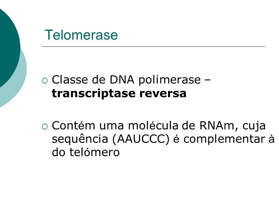 Telomerase Classe de DNA polimerase – transcriptase reversa