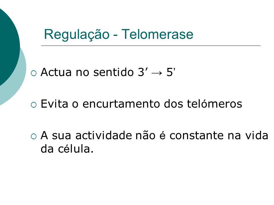 Regulação - Telomerase